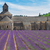 abbey senanque and lavender field france stock photo © neirfy