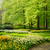 zöld · gyep · gyönyörű · tulipánok · virágok · fű - stock fotó © neirfy