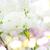 сирень · филиала · свет · весны · дизайна · лист - Сток-фото © neirfy