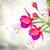 花 · 白 · 葉 · 孤立した · 花 · 春 - ストックフォト © neirfy