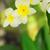 tropische · spa · bloemen · laag · verlichting · natuur - stockfoto © neirfy