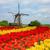 holland · tulpen · veld · tuin · bloem · voorjaar - stockfoto © neirfy