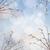 willow twigs with catkins frame stock photo © neirfy