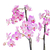 mor · orkide · şube · yalıtılmış · beyaz · doğa - stok fotoğraf © neirfy