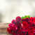 frontière · roses · rouges · rouge · rose · roses - photo stock © neirfy