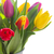 bouquet of yellow purple and red tulips stock photo © neirfy
