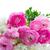 rózsák · vízfesték · fehér · izolált · rózsa · piros - stock fotó © neirfy