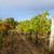vinícola · jardim · belo · uvas · céu - foto stock © neirfy