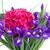 közelkép · kék · virág - stock fotó © neirfy