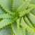 капсула · травяной · изолированный · белый · текстуры - Сток-фото © neirfy