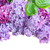arte · hermosa · Pascua · flores · de · primavera · aislado · blanco - foto stock © neirfy