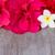sarı · ebegümeci · çiçekler · yalıtılmış · beyaz · sevmek - stok fotoğraf © neirfy