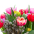 bouquet of  pink, purple and red  tulips stock photo © neirfy