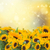 tournesols · fleurs · isolé · blanche · soleil · nature - photo stock © neirfy