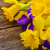 easter daffodils and irise stock photo © neirfy