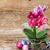 rosa · orquídeas · flores · velho · primavera - foto stock © neirfy