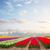 цветок · весны · пейзаж · фон - Сток-фото © neirfy