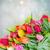 çiçekler · lale · bokeh · bahçe · güzellik · yaz - stok fotoğraf © neirfy