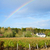 winery garden after rain stock photo © neirfy