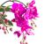 バイオレット · 蘭 · 支店 · 光 · 花 · 抽象的な - ストックフォト © neirfy
