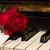 バラ · ノート · 紙 · ピアノ · ヴィンテージ · 花 - ストックフォト © neirfy