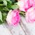 rosa · fresco · rosas · gotas · de · água · branco - foto stock © neirfy