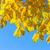 vibrante · caída · follaje · amarillo · árboles - foto stock © neirfy