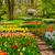 formal · jardim · flores · verão · natureza - foto stock © neirfy