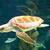 groene · schildpad · rode · zee · vis · natuur · landschap - stockfoto © neirfy