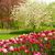 spring garden with blooming tree abd tulips stock photo © neirfy