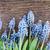 çiçekler · tablo · taze · mavi · ahşap · masa · bo - stok fotoğraf © neirfy