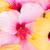 tropicales · hibisco · flores · imagen · tarjeta · invitación - foto stock © neirfy