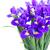 voorjaar · grens · Geel · narcis · Blauw · iris - stockfoto © neirfy