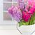 rosa · violeta · flores · verde · jardim - foto stock © neirfy