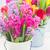 tulipas · rosa · azul · flores · isolado - foto stock © neirfy