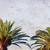 tropische · bomen · blauwe · hemel - stockfoto © neirfy