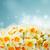 flores · vaso · céu · flores · da · primavera · nuvens · casamento - foto stock © neirfy