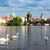 swans with background of charles bridge stock photo © neirfy