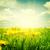 żółty · zielona · trawa · Błękitne · niebo · słońce · piękna - zdjęcia stock © neirfy