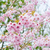 blooming cherry tree stock photo © neirfy