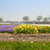 dutch spring flowers field stock photo © neirfy