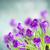 wiosną · śniegu · kwiaty · bokeh · Wielkanoc · niebo - zdjęcia stock © neirfy