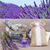 lawendy · kwiaty · świeże · wyschnięcia · suszy · biały - zdjęcia stock © neirfy