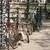 Amsterdam · vélo · belle · vue · rue · rose - photo stock © neirfy