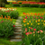 石 · パス · 庭園 · 方法 · 春の花 · 開花 - ストックフォト © neirfy