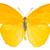 colorido · abstrato · borboleta · branco · floral · arte - foto stock © neirfy
