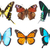 tropical butterflies border stock photo © neirfy