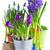 violet · zambila · grădină · alb · floare · natură - imagine de stoc © neirfy