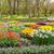 春 · 庭園 · ツリー · チューリップ · 花 - ストックフォト © neirfy