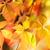 мелкий · Focus · осень · клен · листьев - Сток-фото © nejron